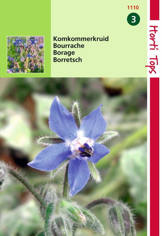 Hjulkrone, Borage officinalis, frø